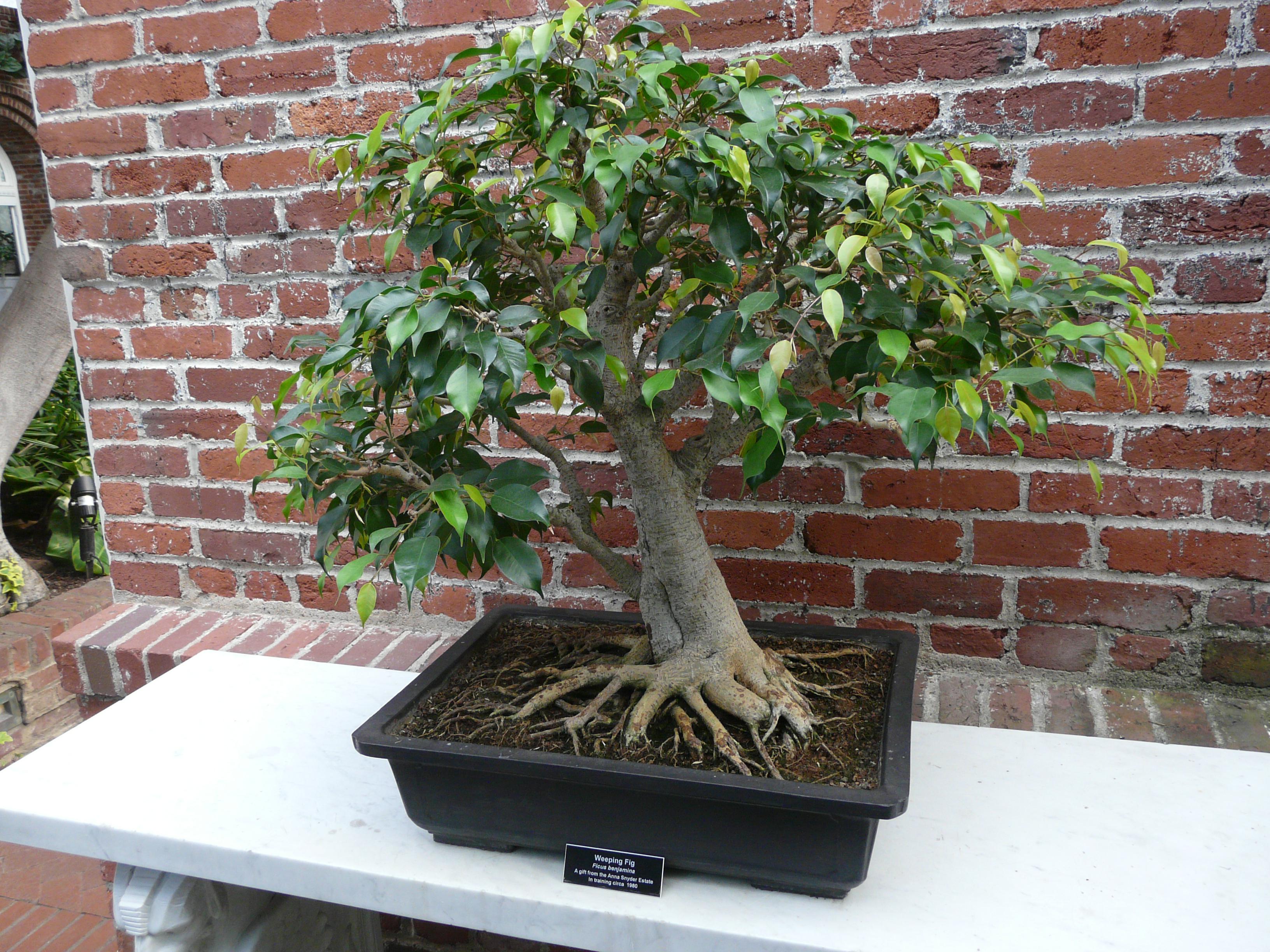 Как сделать дерево в домашних условиях фото 611