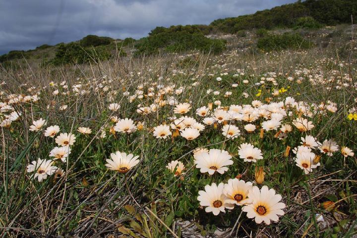 Садовые цветы: розы, тюльпаны 70