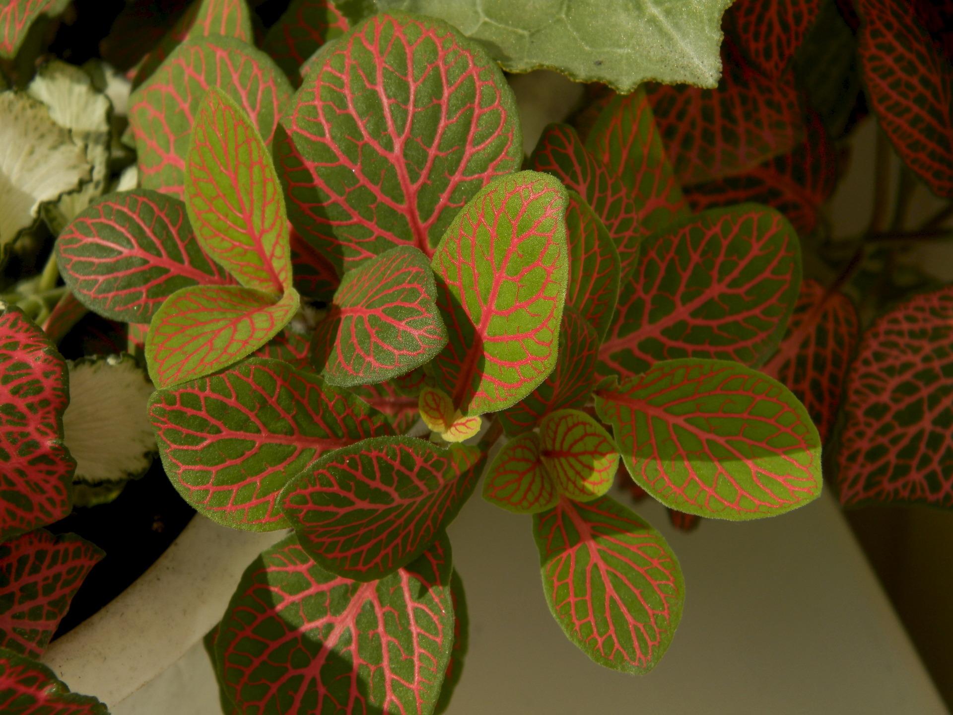 Фото домашних цветов с красными цветами и зелеными листьями
