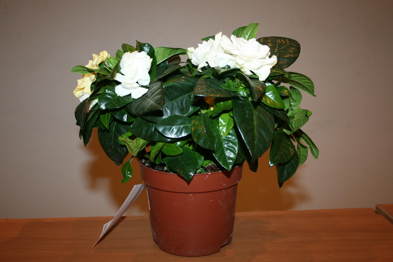 Уход в домашних условиях за растениями 559