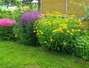 Гелиопсис среди других цветов