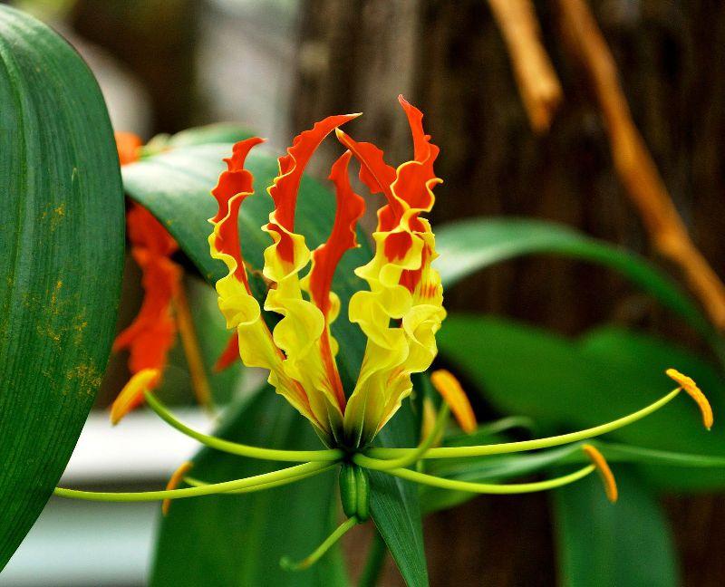 Комнатные цветы из семян: как вырастить в домашних условиях 22