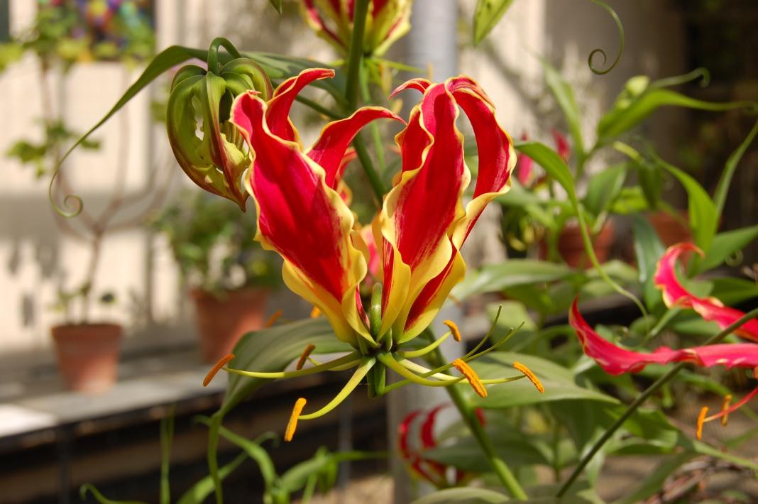 Комнатные цветы из семян: как вырастить в домашних условиях 13