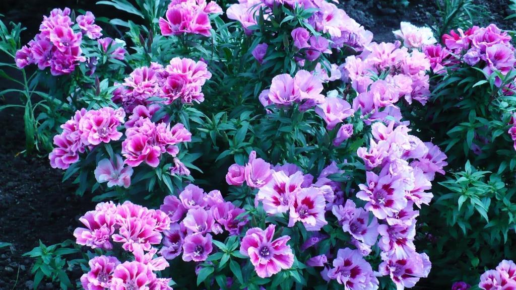 Цветок с большим красным цветком фото