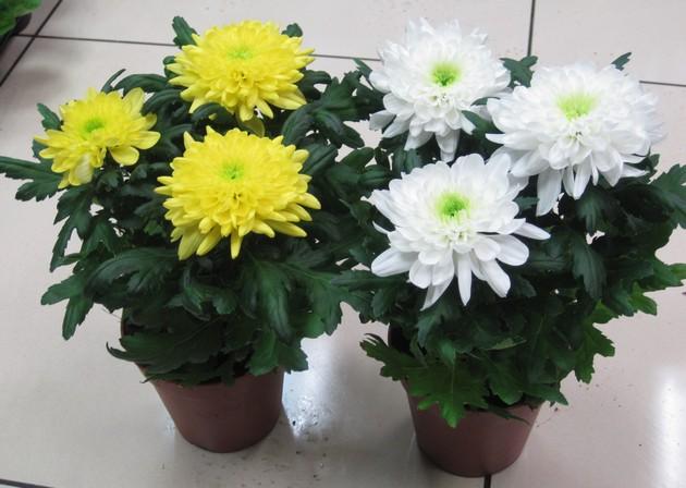 комнатные растения в горшке картинки