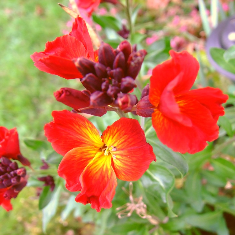 Цветок ландыша фото