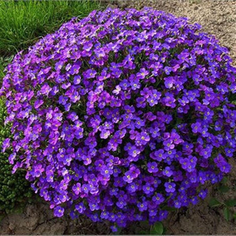 294Почвопокровные садовые цветы