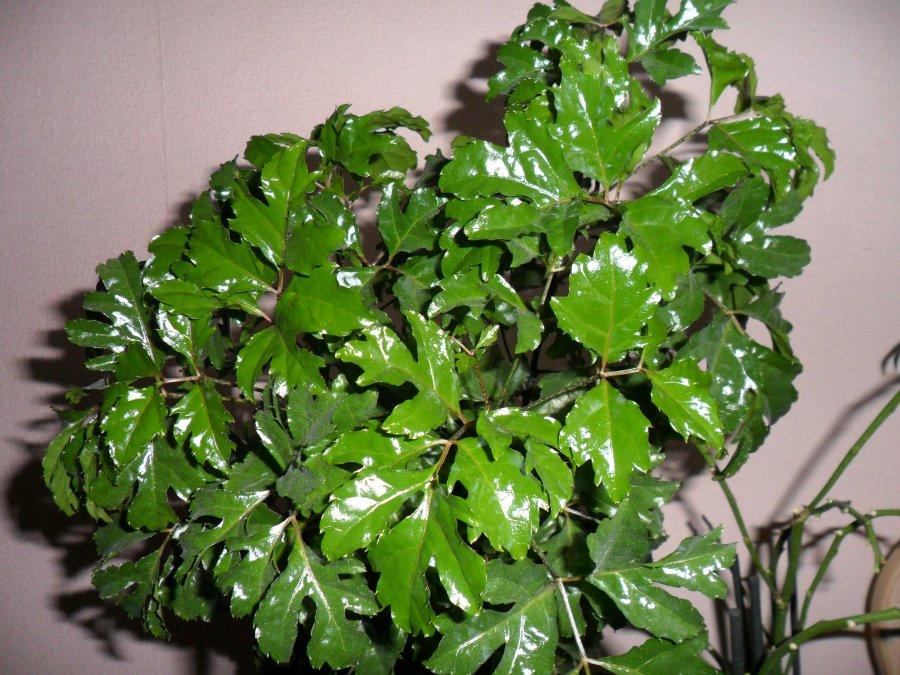 Комнатные растения в горшках  купить в интернетмагазине IKEA