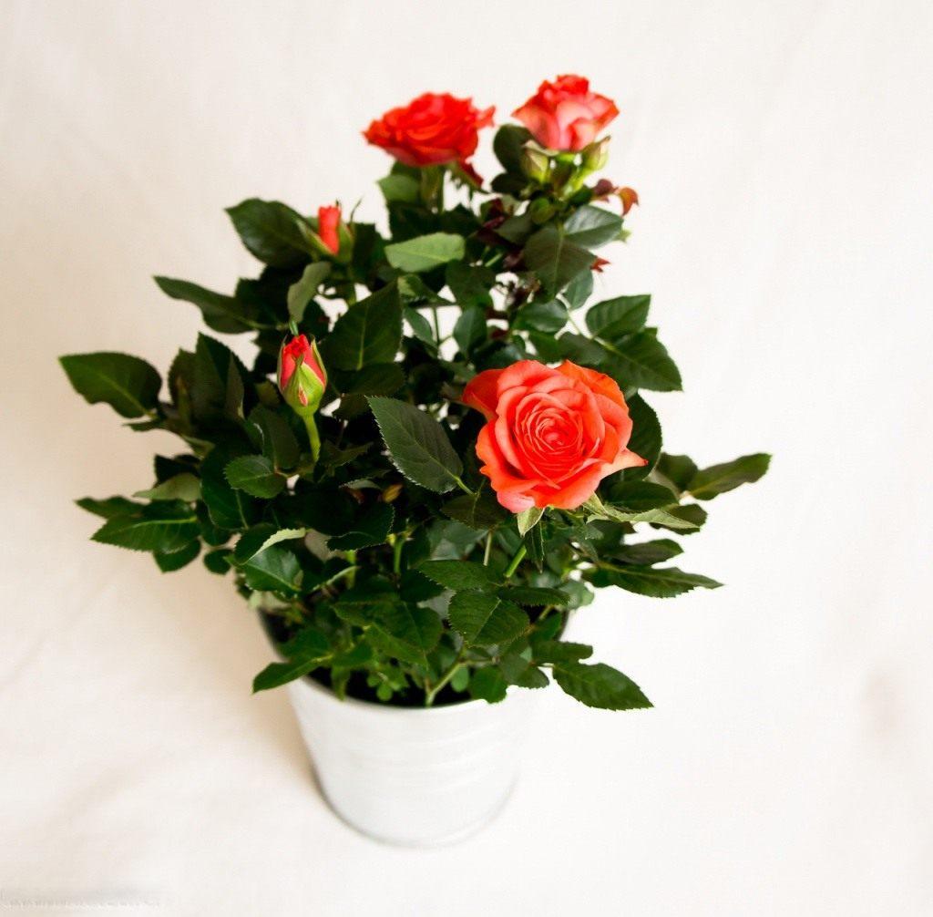 В горшках с цветами мелкие