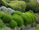 Сантолина зеленоватая