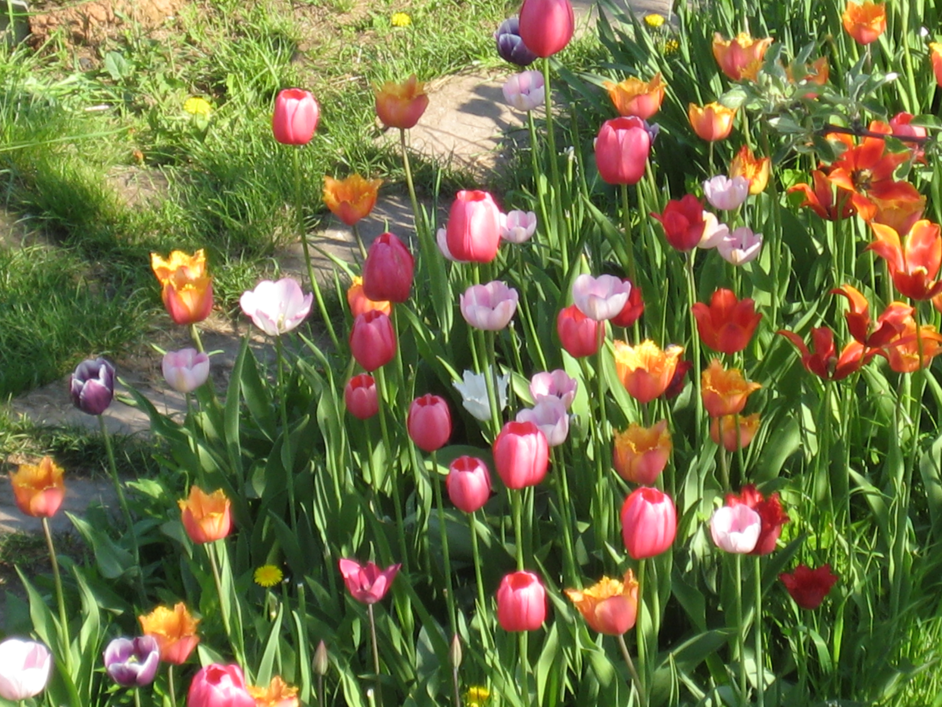 Весенние Цветы Моего Сада. Простая Жизнь 17