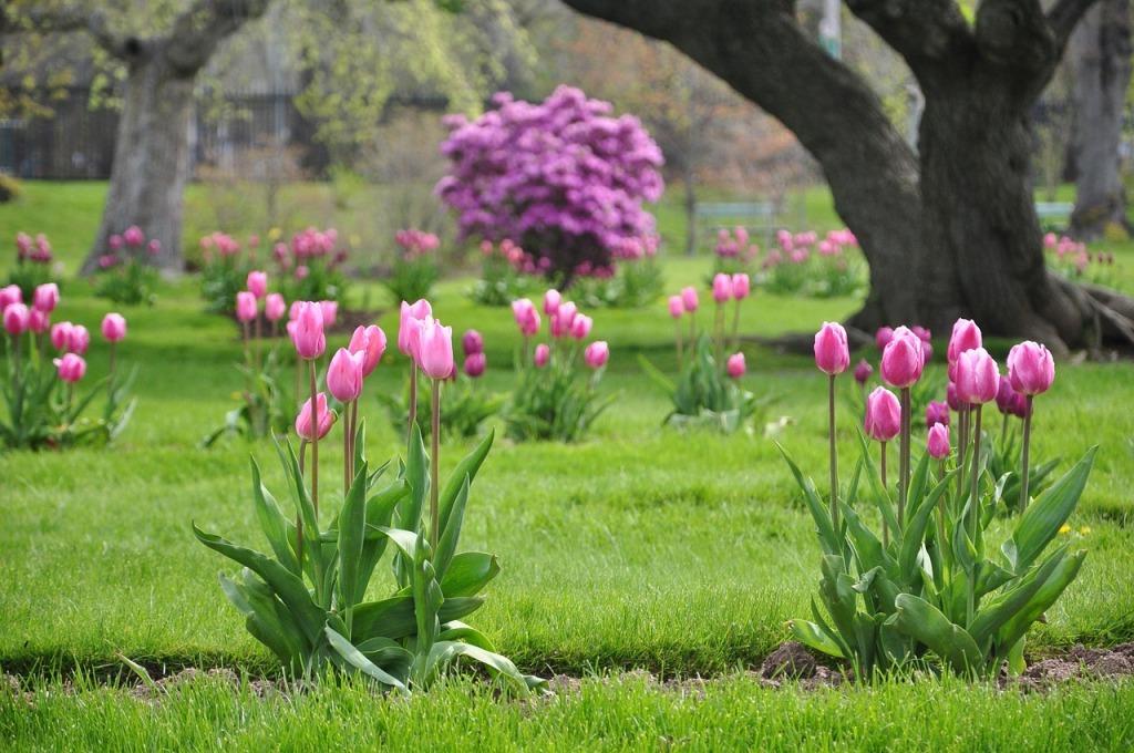 используют это можно ли сажать тюльпаны в ноябре вас