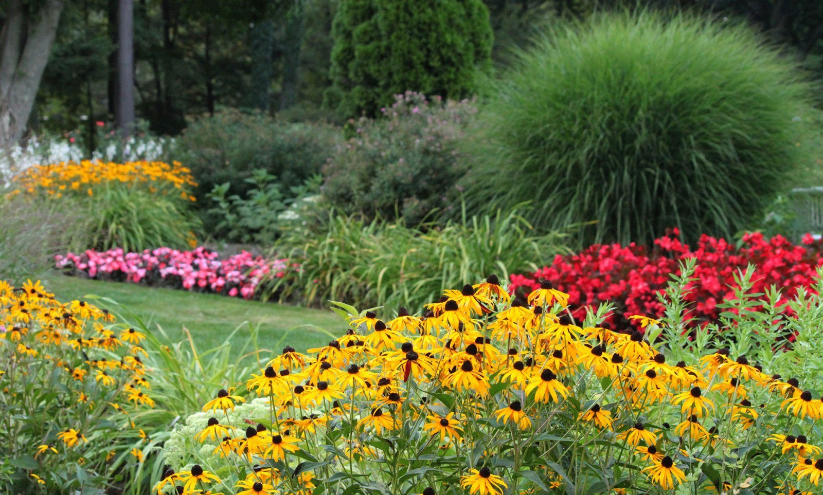 Все фото и виды садовых цветов