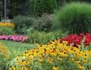 Рудбекия среди других цветов