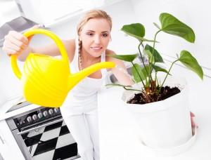 Уход в домашних условиях за сингониумом