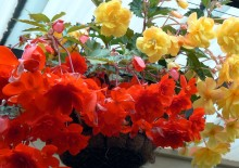 Молочай цветок