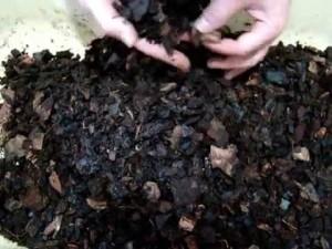 Почва для мильтонии