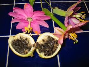 Размножение семенами пассифлоры