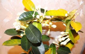 Почему желтеют листья у растения?