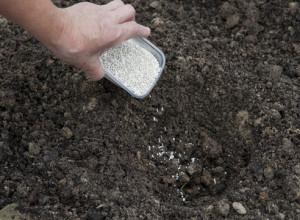 Почва и удобрения для гортензии