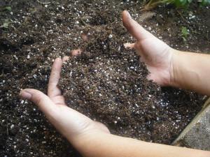 Почва для хавортии