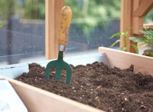 Гемантус белоцветковый уход в домашних условиях