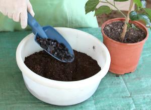 Почва и подкормка