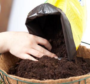 Почвеаи подкормка для растений