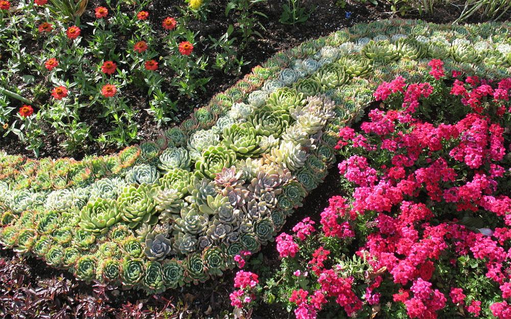 Использование каменной розы в ландшафтном дизайне