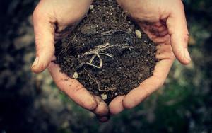 Требование к почве для растения наперстянка