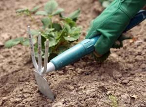 Уход за растением лихнис