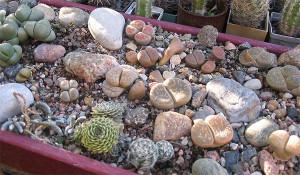 Почва для живых камней