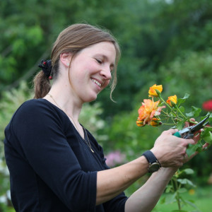 Обрезка розы Йеллоу