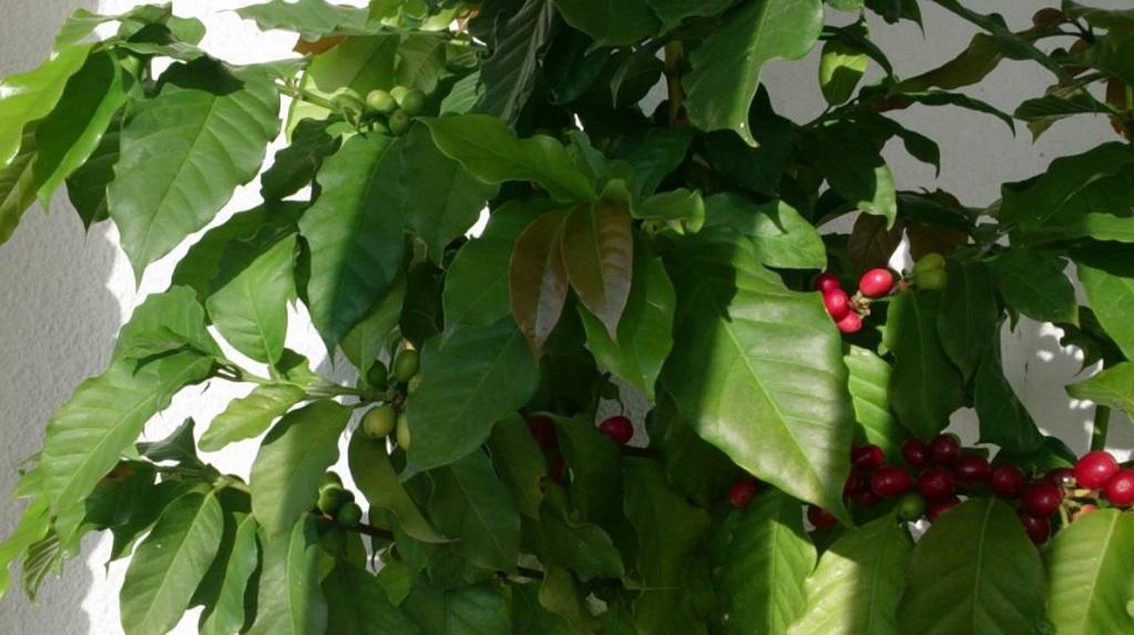 комнатный цветок бегония уход и размножение