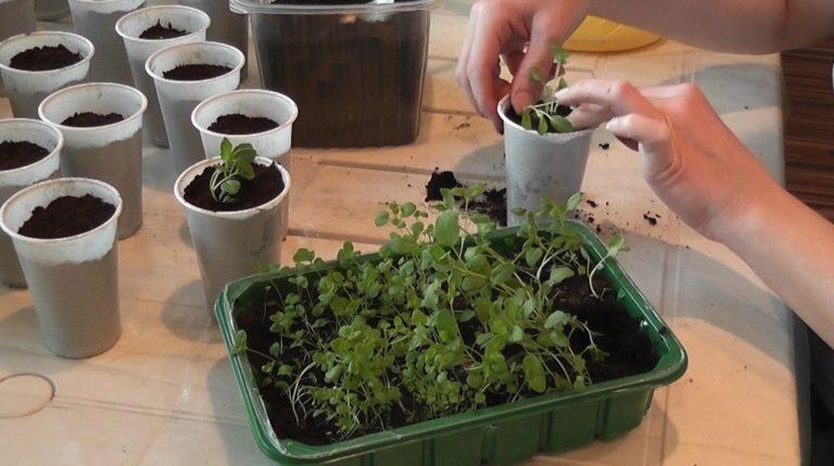 Выращивание рассады из семян 880