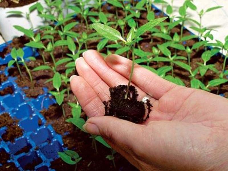 Посев семян цветов для рассады 28