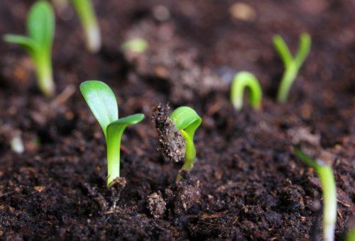 Вырастить рассаду зимой