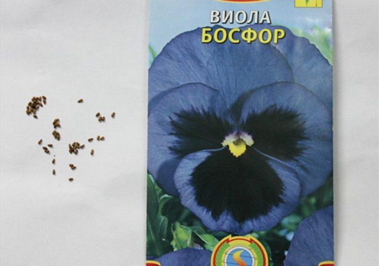 Цветы виола семена и выращивание 780