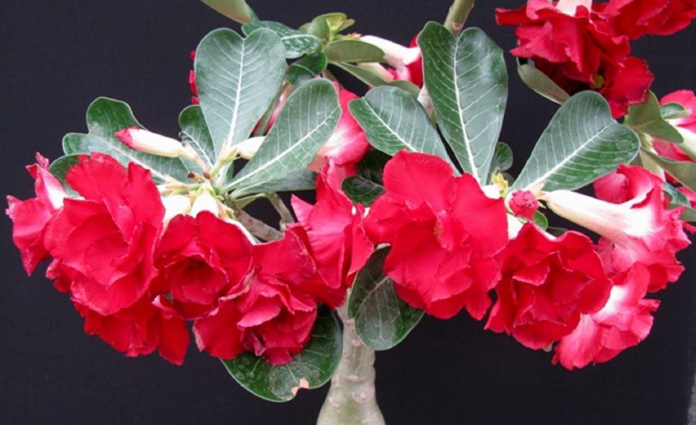 садовые цветы названия и многолетние лилии и розы и фото
