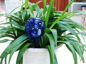aqua globs