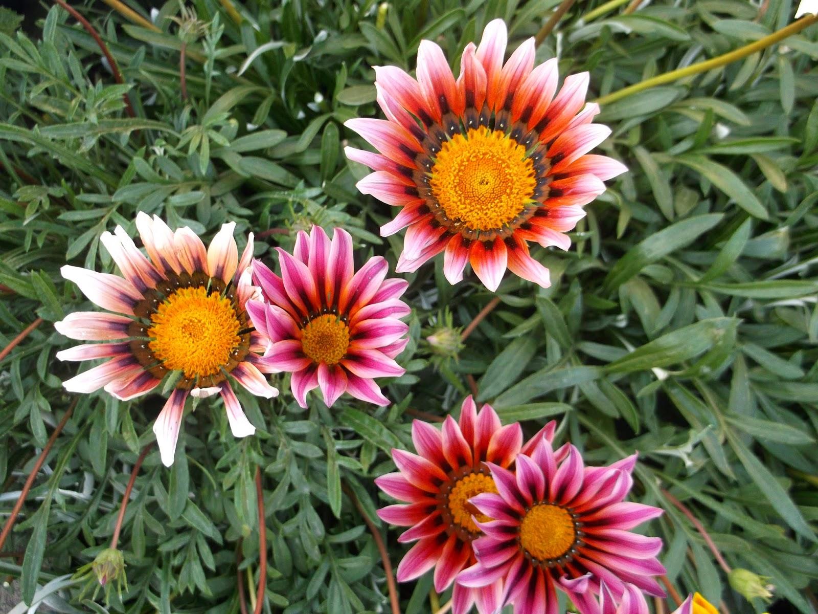 Картинка цветок гацания