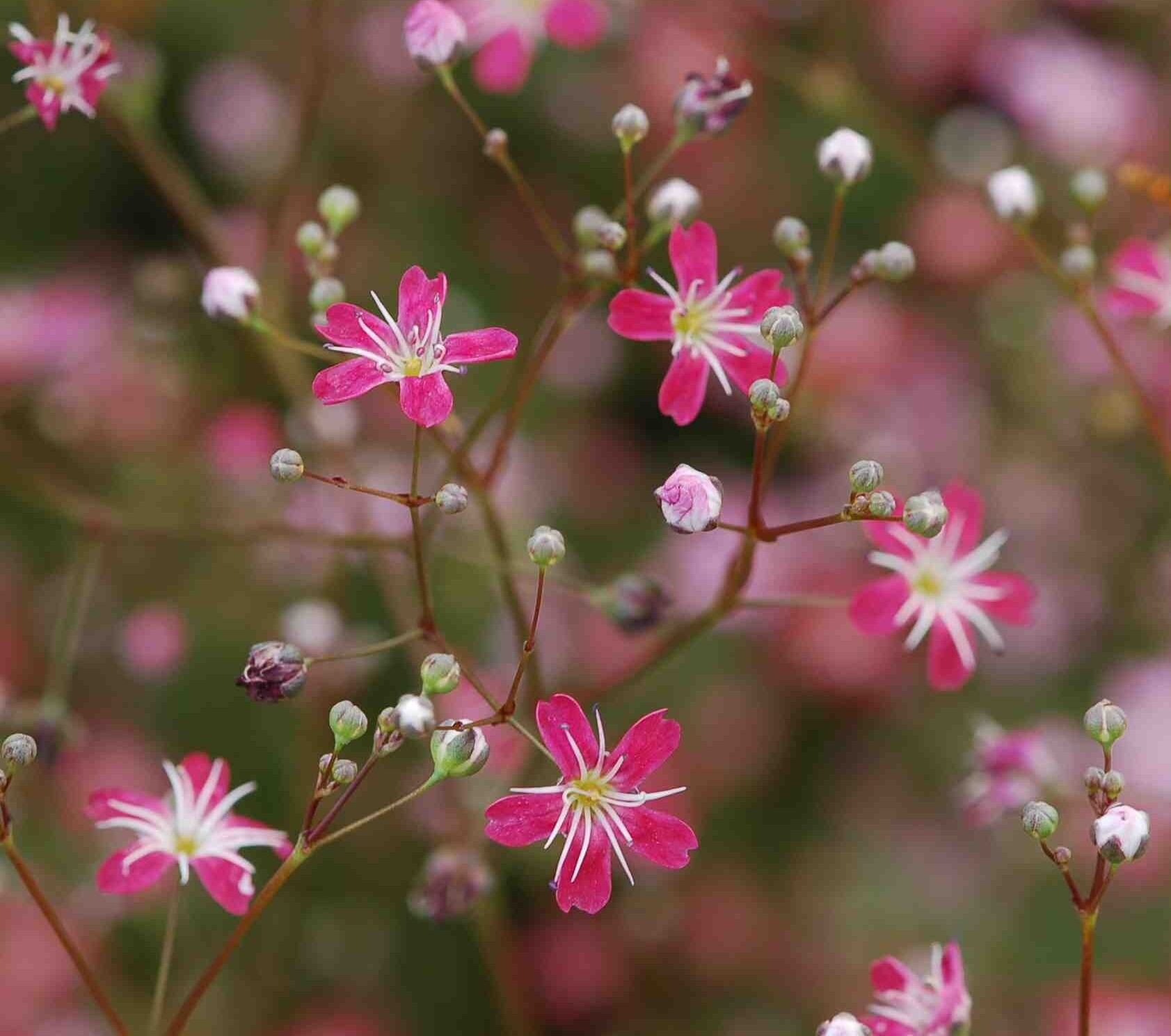 Картинка мелкие цветы