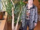Комнатное растение нолина