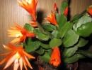 Шлюмбергера оранжевая