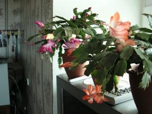 Не переставляйте горшок во время цветения