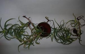 Размножение комнатного растения алоэ