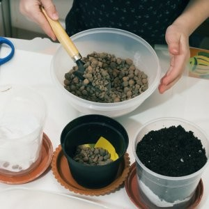 Почва для цикламена