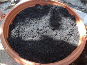 Почва и подкормка стефанотиса