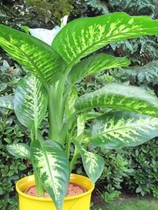 Влажность воздуха для комнатного растения