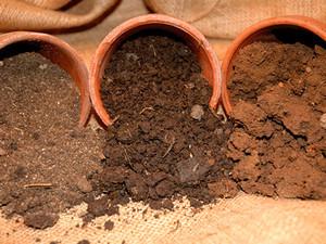 Почва для бутылочного дерева